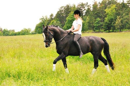 cheval-et-cavaliere